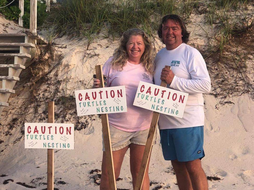 Turtle Hill sees new Turtle Nests