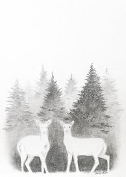 Albino Deer of Charlottesville