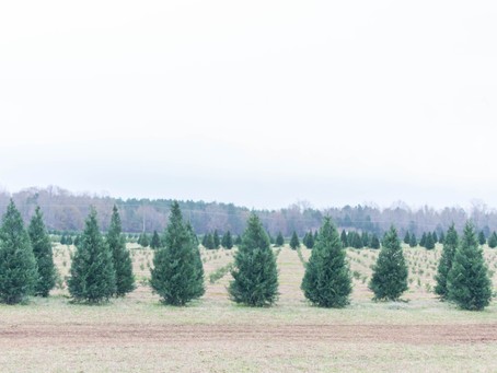 Old Fashioned Christmas Tree Hunting