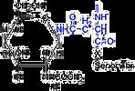 Oligosaccharides