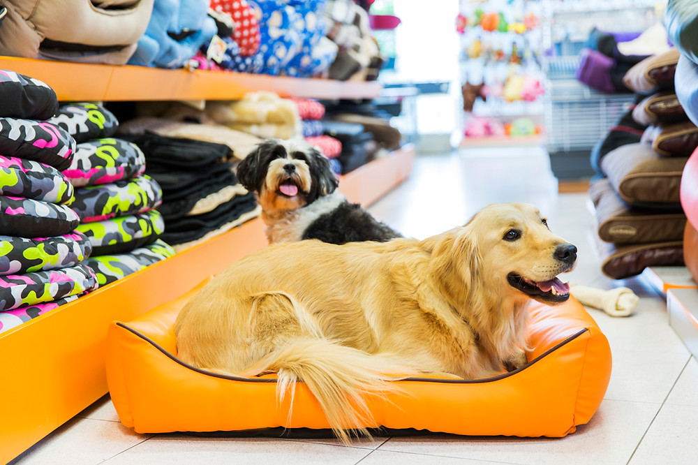 Two dogs sitting in a bed in a pet store aisle.