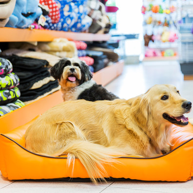 Designing a Pet-Friendly Room