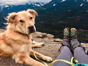 5 Tips for Hiking Safely with your Dog in the PNW
