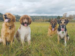 Local Pet Professionals We Trust
