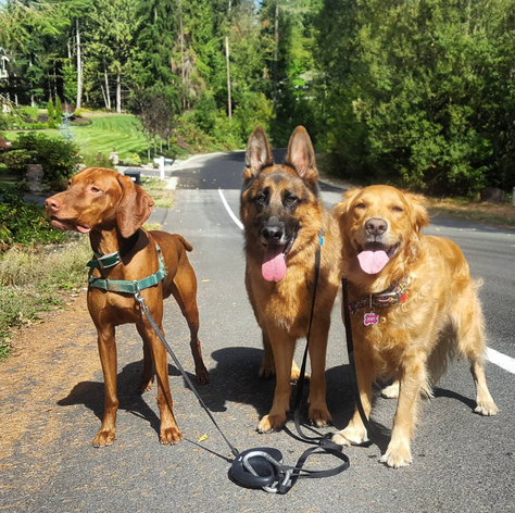 K9 Ascent - Kirkland Dog Walking