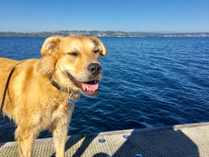 Discover Kirkland Parks to Enjoy with your Dog!