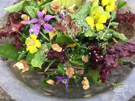 Wild Salad Adventures!