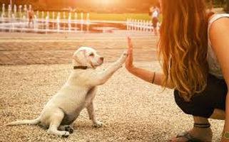 education-canine-savoie-73-chambery.jpg