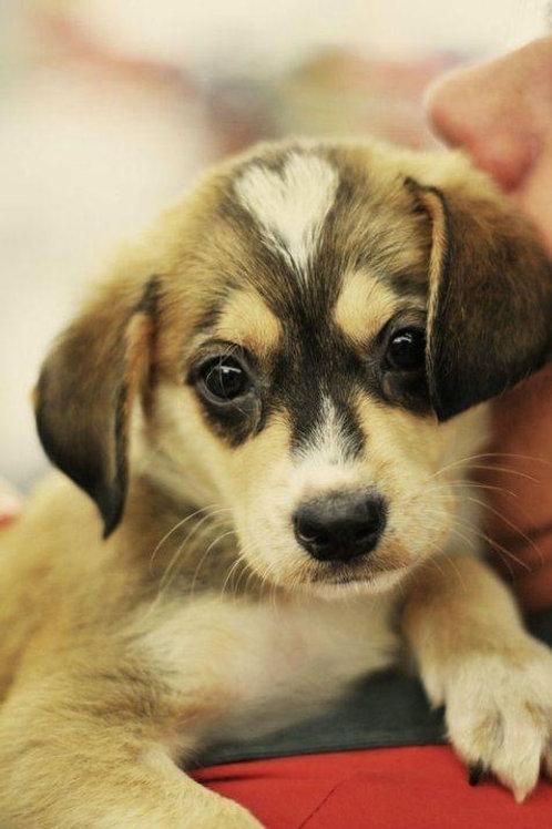 Forfait 8 séances d'éducation canine individuelle durée 1h/séance