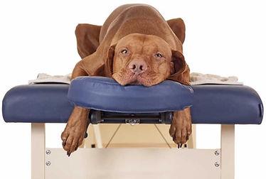 massage-canin-chambéry-73-Savoie.JPG
