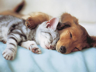 garde-d-animaux-pet-sitter-chambery-savoie-73.jpg