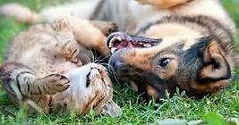 gardiennage-d-animaux-à-domicile-chambery-savoie-73.jpg