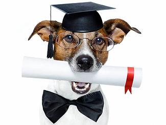 education-canine-chambery-73-savoie.jpg