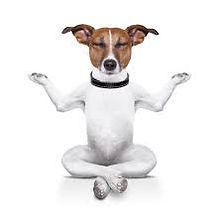 massage-canin-savoie-73-chambery.jpg
