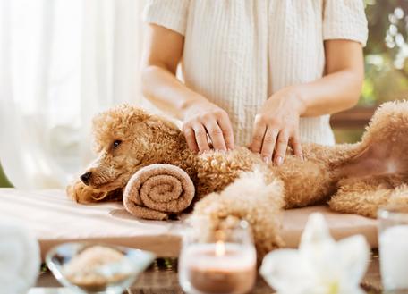 massage-canin-chambery-savoie-73.png
