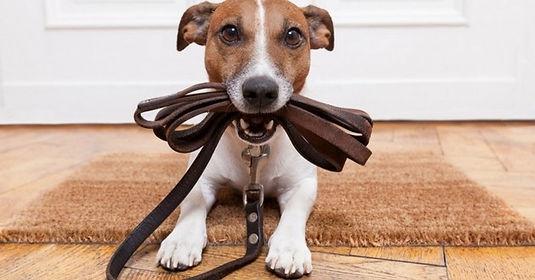 éducation-canine-chambery-savoie-73.jpg