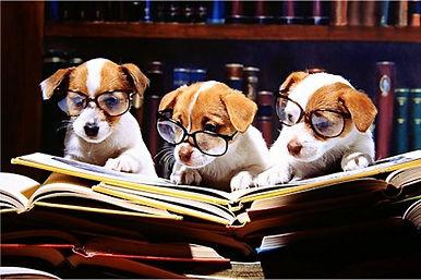 education-canine-chambery-savoie-73.jpg