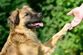 1 séance d'éducation canine individuelle durée 1h