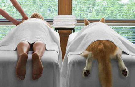 massage-canin-chambery-Savoie-73.JPG