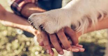 education-canine-positive-chambery-savoie-73.jpg