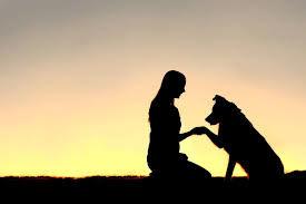 éducation-canine-positive-savoie-73-chambery.jpg
