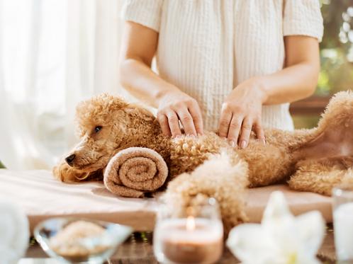 1 massage bien-être canin d'une durée de 30min à domicile.