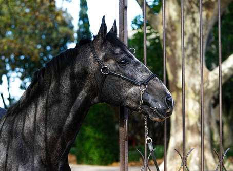 How to make portraits of horses?