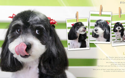 Songspetgrooming solutioingenieria Image collections