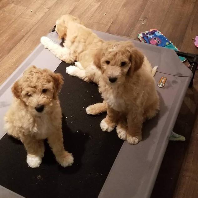 Puppy Room5.jpg