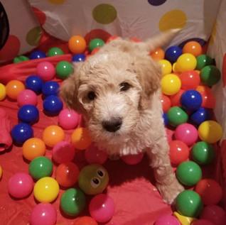 Puppy Room16.jpg