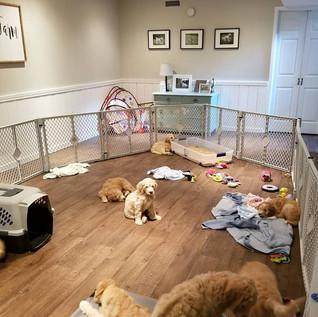 Puppy Room2.jpg