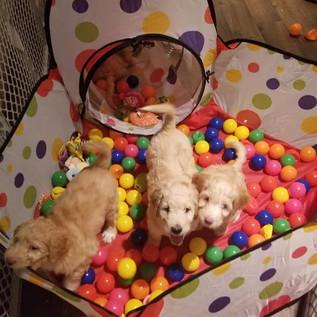 Puppy Room14.jpg