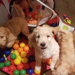 Puppy Room13.jpg