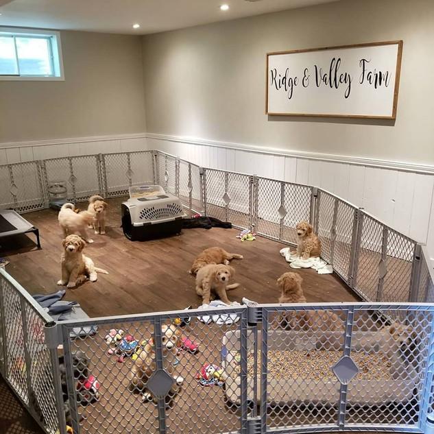 Puppy Room4.jpg