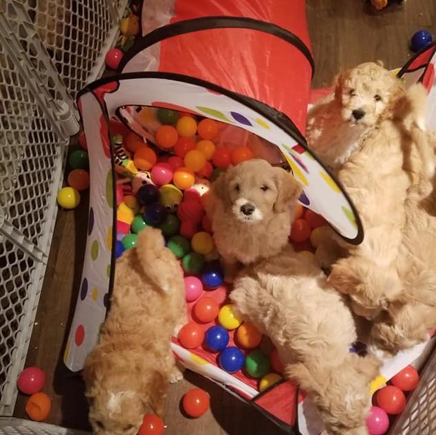 Puppy Room.jpg