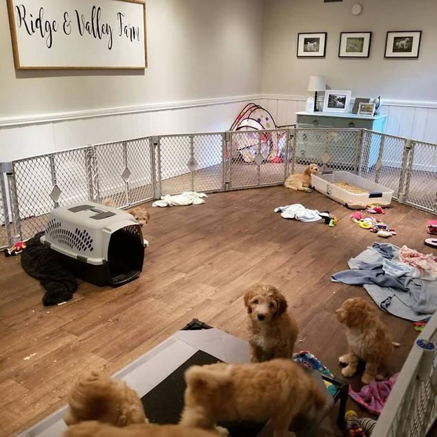 Puppy Room1.jpg