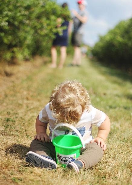 little boy picking blueberries at u-pick farm