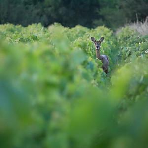 La Rousselière et sa faune