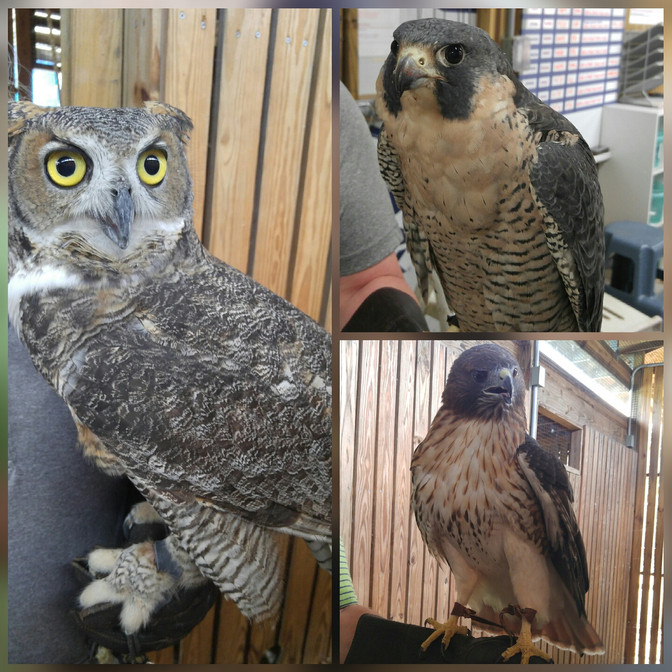 Raptor Center located miles down your home.