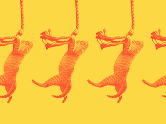 o método save the cat!