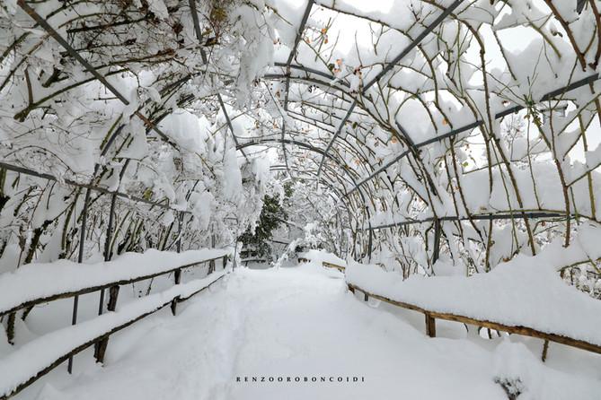 sous la neige les galeries de roses sont magiques
