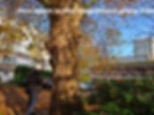 IMG_2841_edited.jpg