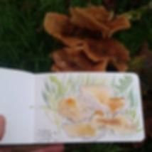 Fungi CRE Sim.JPG
