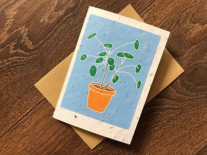 Pilea peperomioides Card with Seeds   Charlie Collis Design.jpg