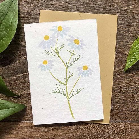 Camomile-seed-plantable-congratulations-card.jpg
