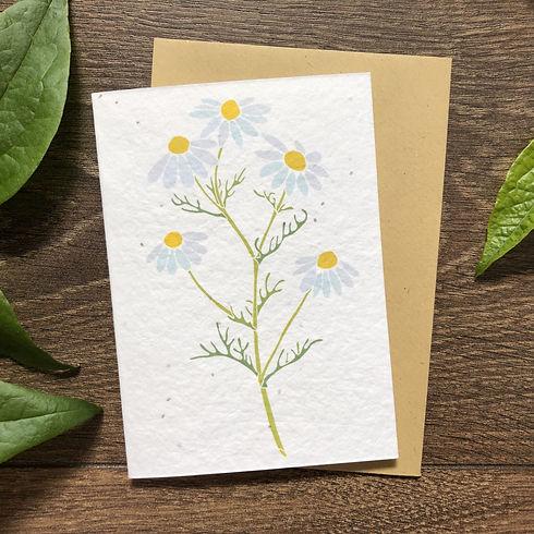 Camomile Plantable Card.jpg
