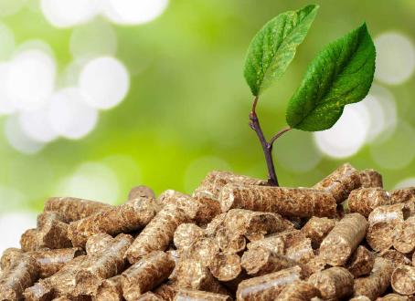 Il mercato della biomassa varrà nel 2020 11,5 mld