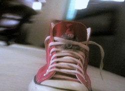 Converse Commercial - Screenshot_Hightop Hightailing
