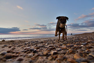 Beach fun for dogs on the Isle of Wight
