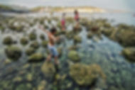 Rock Pools and Crabbing on the Isle of Wight